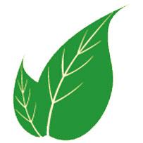 prostatit-iltihabına-iyi-gelen-bitkiler